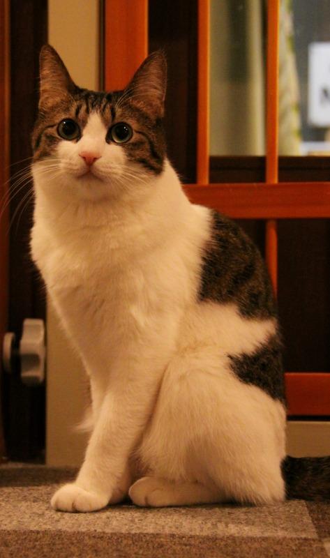 神戸市元町「cat nafe Nyanny」_d0167436_214423100.jpg