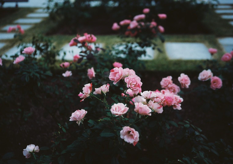 f0209159_1992093.jpg
