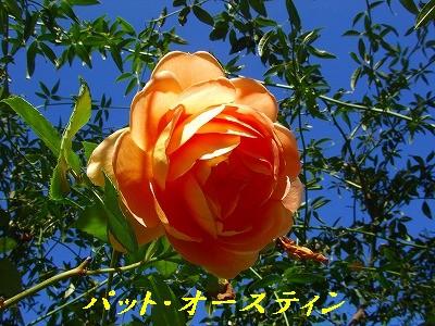 a0104162_2010339.jpg