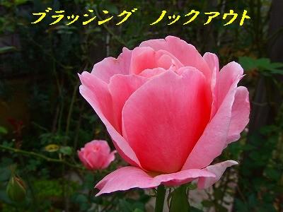a0104162_20115713.jpg