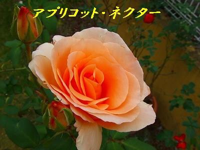 a0104162_20121884.jpg
