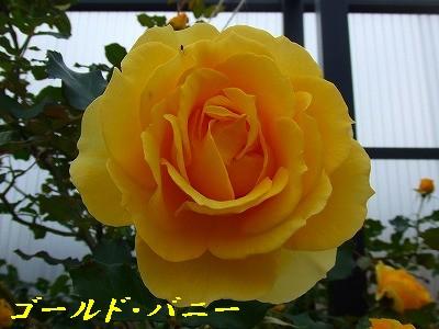 a0104162_20122586.jpg
