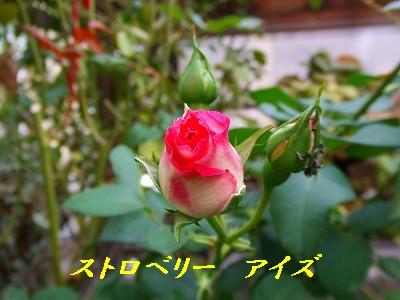 a0104162_20125496.jpg