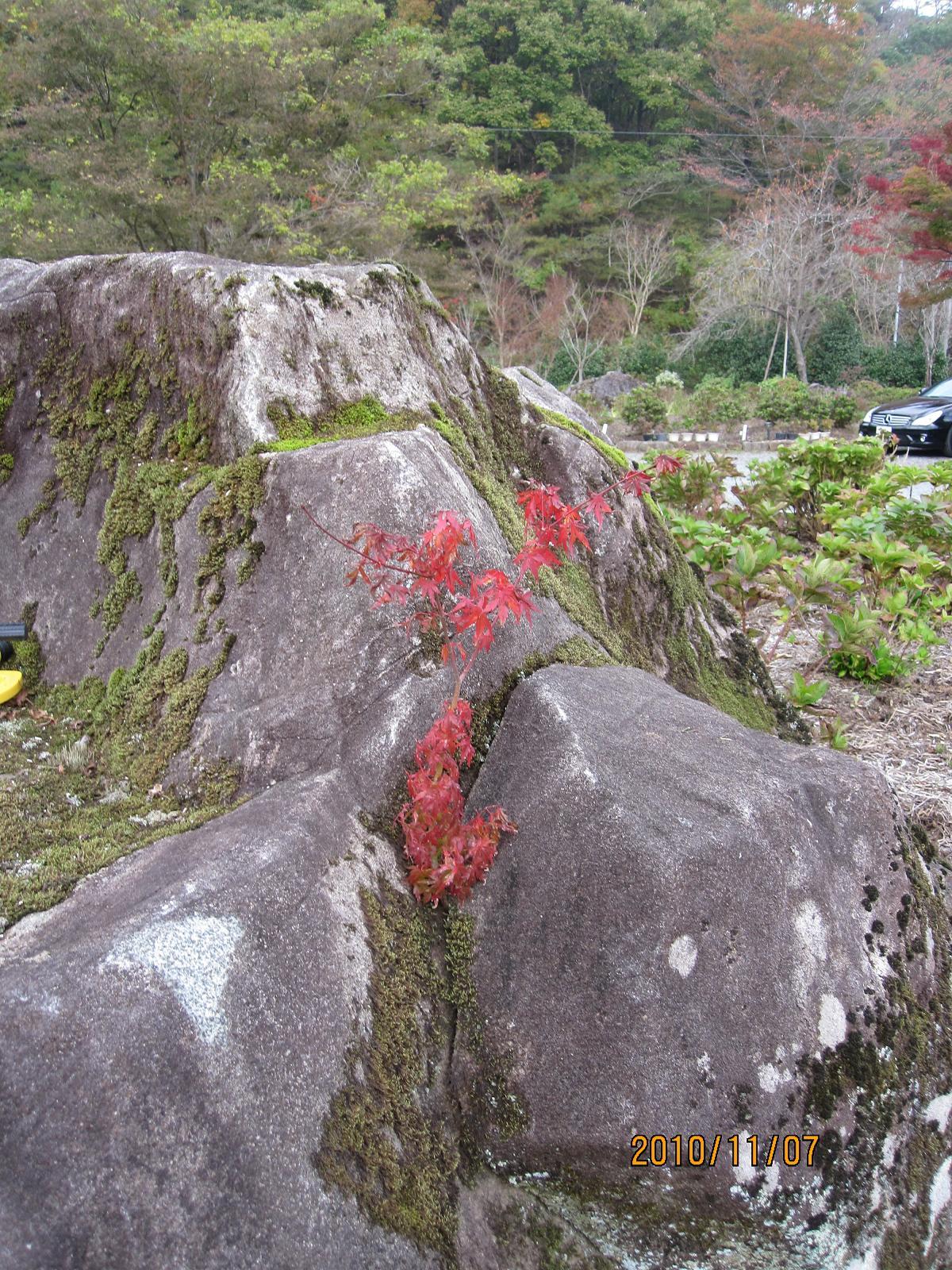 園も秋色に_f0085369_7354050.jpg