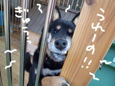 伊佐蔵とレイカ_b0057675_10491112.jpg