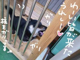 伊佐蔵とレイカ_b0057675_10491165.jpg