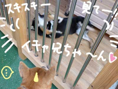 伊佐蔵とレイカ_b0057675_10491238.jpg