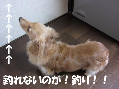 牛久沼_b0200291_19151656.jpg