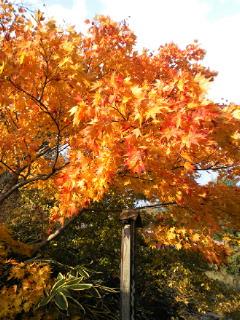 そして秋はチョコ_a0134394_9501874.jpg