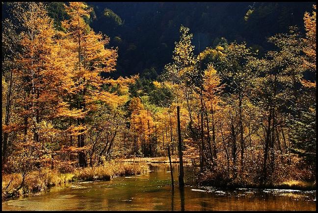 上高地の紅葉 田代湿原と田代池_b0145398_2331638.jpg