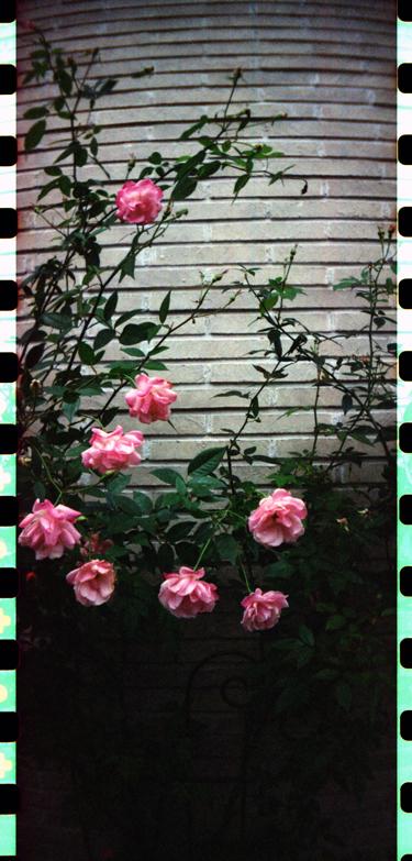 f0174201_15583690.jpg