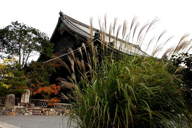 嵯峨釈迦堂(清涼寺)_e0048413_18434648.jpg