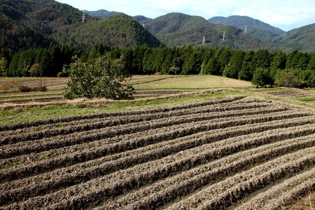 山里 越畑_e0048413_1932289.jpg