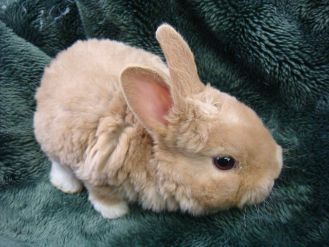 ウサギ_f0189122_1361884.jpg
