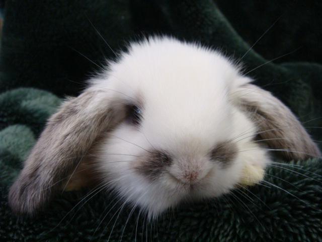 ウサギ_f0189122_137730.jpg