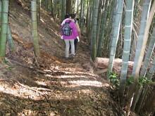高浜町で開催された「森林療法」研修会に参加しました(その2)_e0061225_12234119.jpg