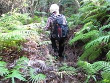 高浜町で開催された「森林療法」研修会に参加しました(その2)_e0061225_12591116.jpg