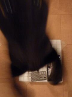 ヤマト発進せよ!猫。_a0143140_2157814.jpg