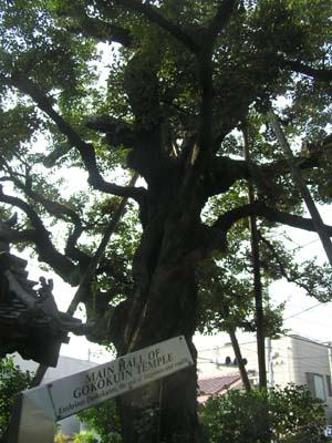 『牡丹燈籠』散歩2 根津清水谷の萩原新三郎寓居はどこにあったのか?  _f0147840_21485089.jpg