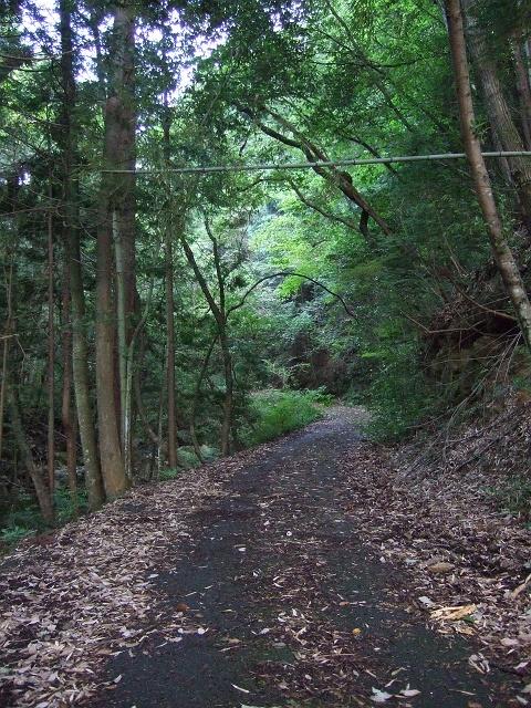県道335号線 笹ヶ峠の「険道」を行く その2_b0095061_9475884.jpg