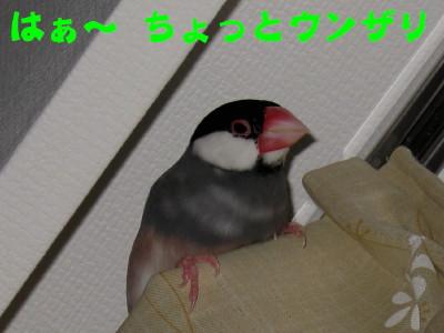 b0158061_21493044.jpg