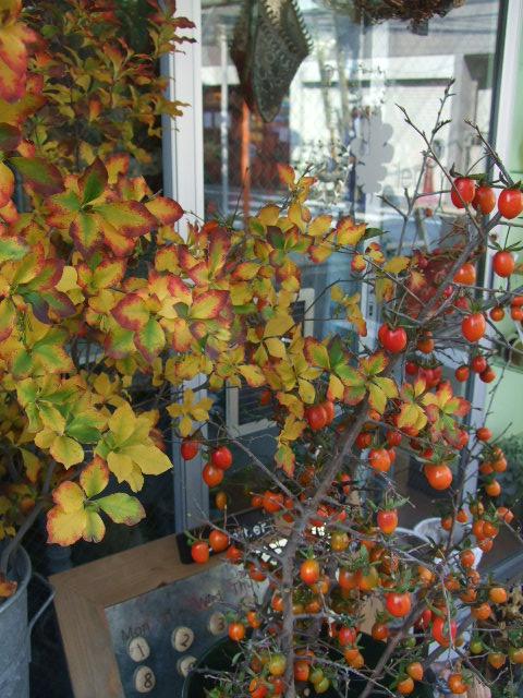 オークリーフ(今週も、老爺柿を置きました)_f0049672_12354965.jpg