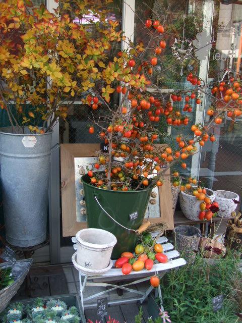 オークリーフ(今週も、老爺柿を置きました)_f0049672_12355780.jpg