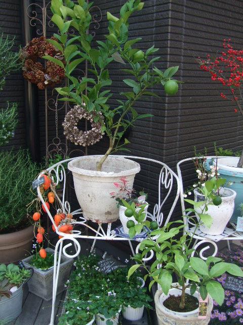オークリーフ(今週も、老爺柿を置きました)_f0049672_12413154.jpg