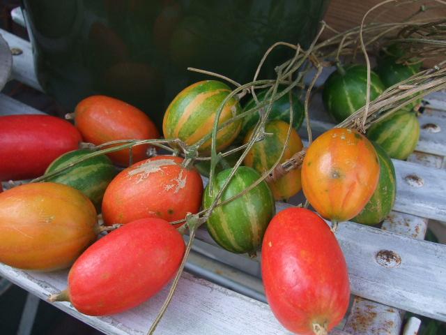 オークリーフ(今週も、老爺柿を置きました)_f0049672_12414773.jpg