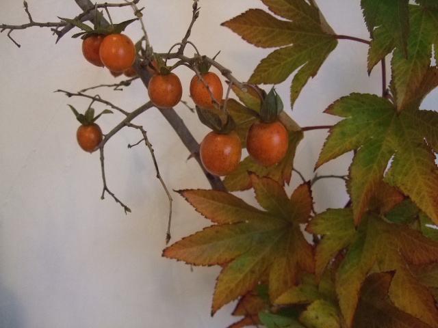 オークリーフ(今週も、老爺柿を置きました)_f0049672_12573572.jpg
