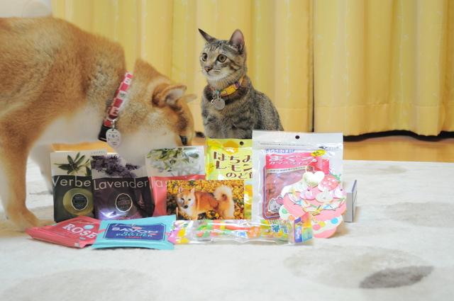 プレゼントをありがとう!_a0126590_4495059.jpg