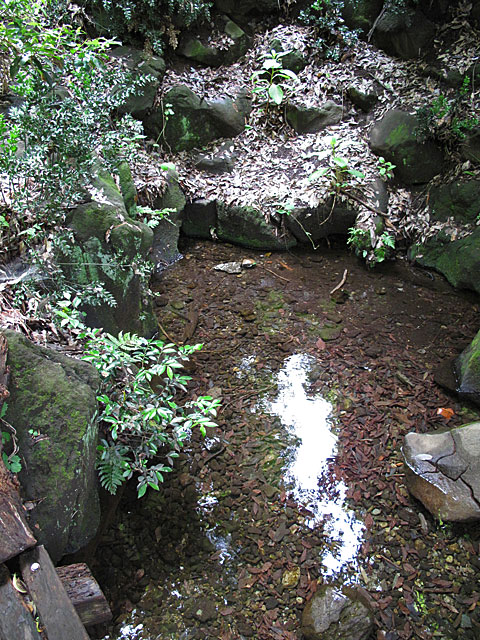 落合川を辿る(5)こぶし沢と落合川下流_c0163001_20301824.jpg