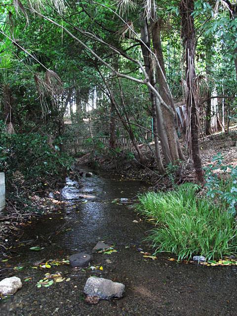 落合川を辿る(5)こぶし沢と落合川下流_c0163001_2030285.jpg