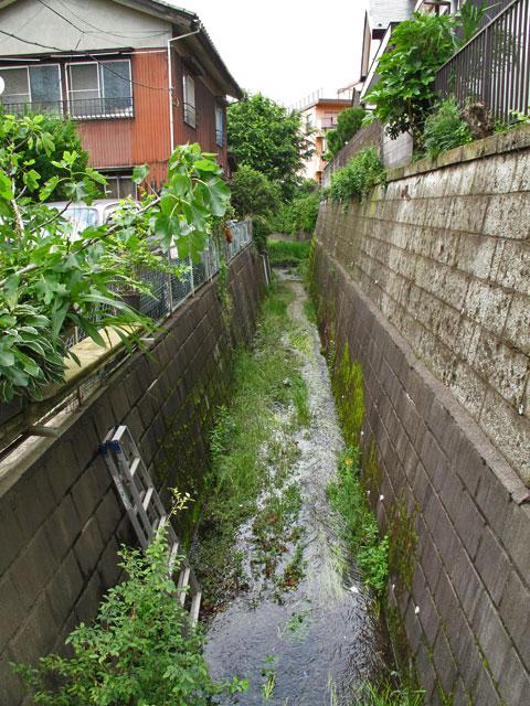 落合川を辿る(5)こぶし沢と落合川下流_c0163001_20311586.jpg