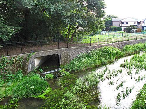 落合川を辿る(5)こぶし沢と落合川下流_c0163001_20312475.jpg