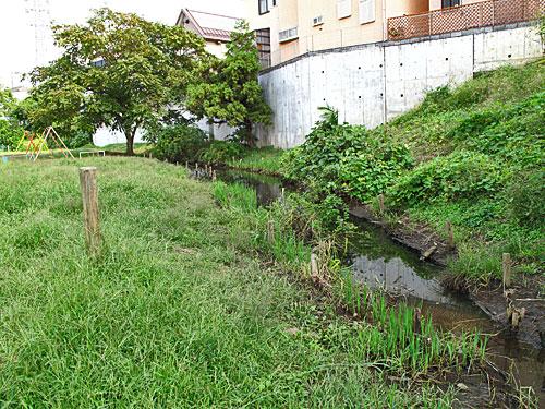 落合川を辿る(5)こぶし沢と落合川下流_c0163001_2032159.jpg