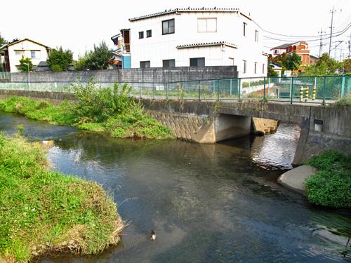 落合川を辿る(5)こぶし沢と落合川下流_c0163001_20331659.jpg