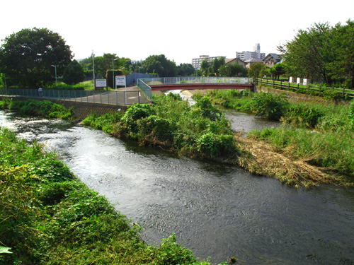 落合川を辿る(5)こぶし沢と落合川下流_c0163001_20342545.jpg