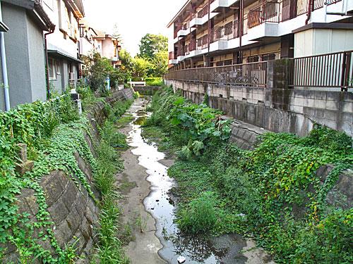 落合川を辿る(5)こぶし沢と落合川下流_c0163001_20352013.jpg
