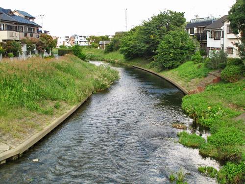 落合川を辿る(5)こぶし沢と落合川下流_c0163001_2035592.jpg