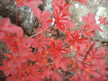 2010年 紅葉の御在所岳_d0130209_23414285.jpg