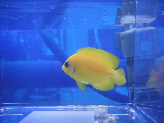 海水魚・水草・淡水魚_f0189122_1362325.jpg