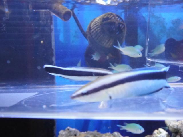 海水魚・水草・淡水魚_f0189122_1385866.jpg
