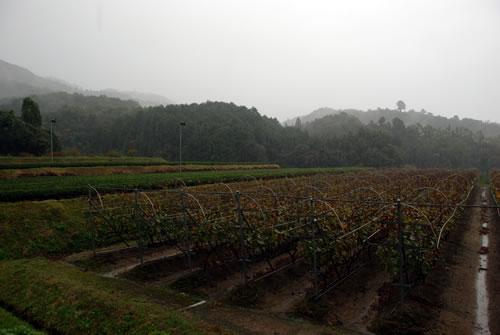 九州ワイナリー巡り ~熊本・熊本ワイン~_b0206537_21171611.jpg