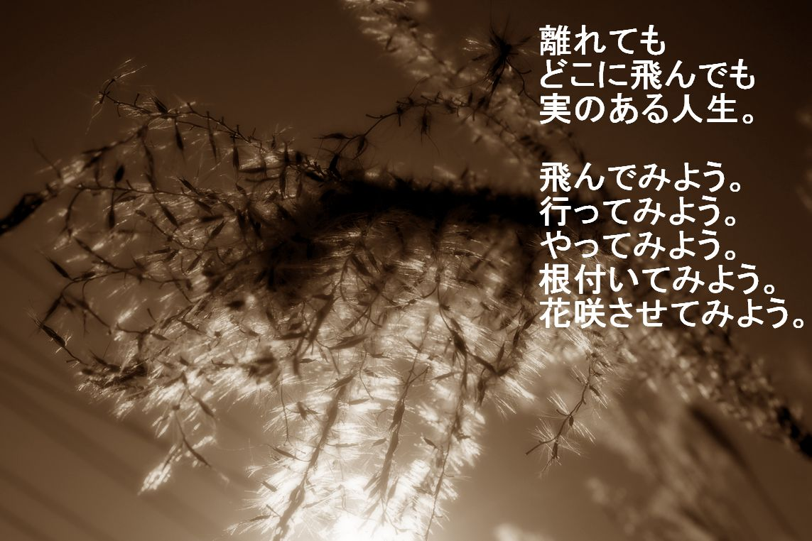 c0220249_22524684.jpg