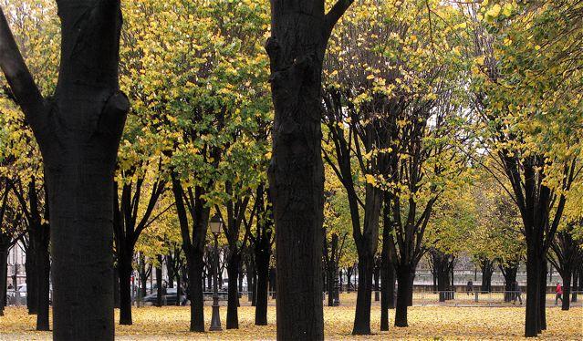 あらら〜途中から又雨が〜(セーブルバビロンーパリ左岸)_f0119071_815767.jpg