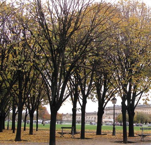 あらら〜途中から又雨が〜(セーブルバビロンーパリ左岸)_f0119071_8162071.jpg