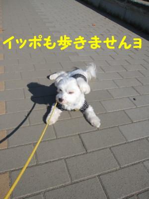 b0193480_16358100.jpg