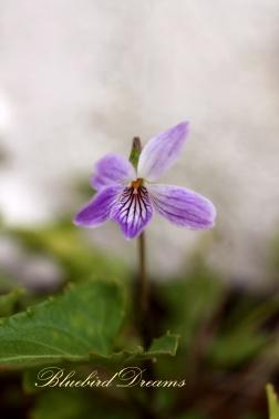 誠実という花。。_c0178104_10313169.jpg