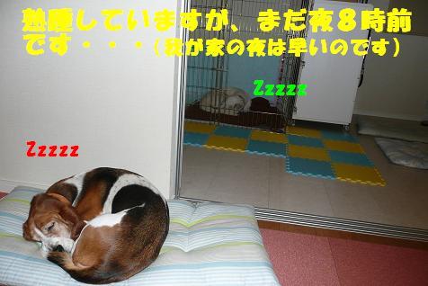 f0121712_683560.jpg